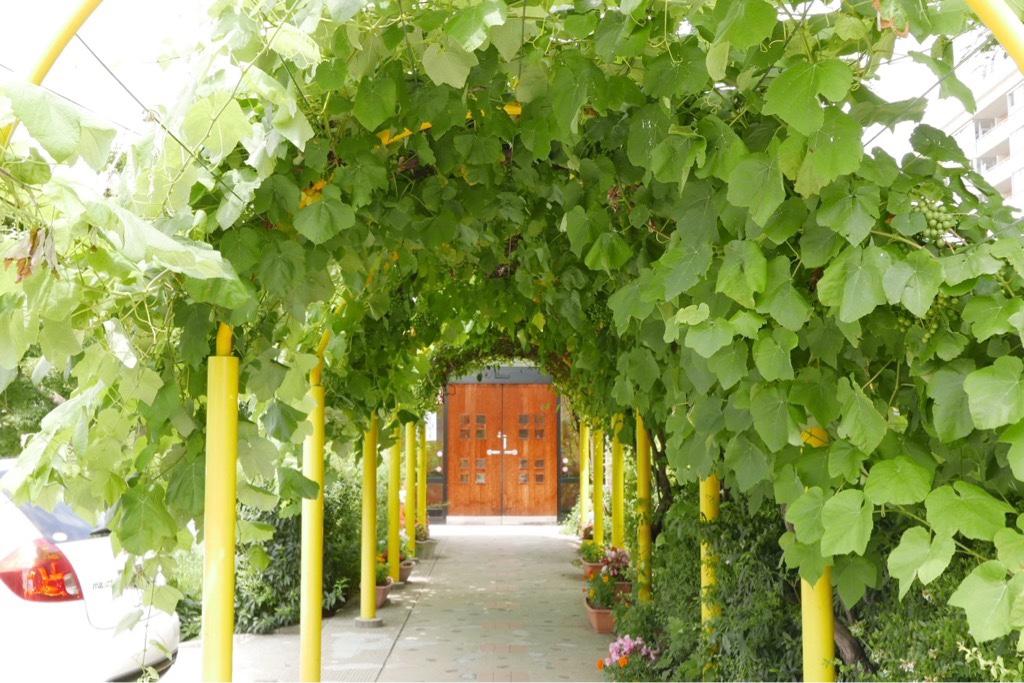 子育て支援センター入口緑のトンネル